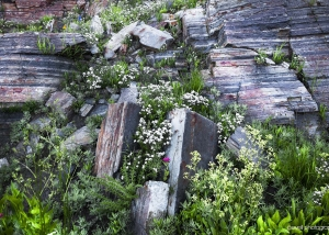 Albion Basin Garden Wall, Alta, Utah