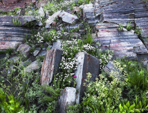 Albion Basin Garden Wall